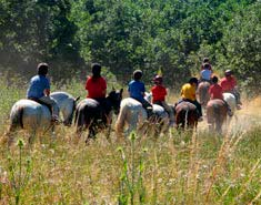 Equitación. Caballo en campamento de verano Madrid agosto.