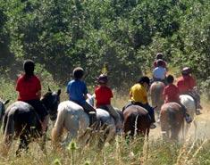 Jornadas de equitacion y campo