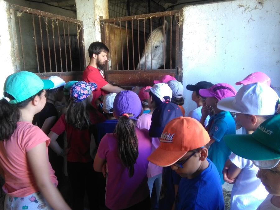 Visita a cuadras. Campamento de verano en Segovia Riaza