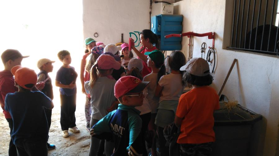 Cuadras y caballos. Campamento de verano en Segovia Riaza