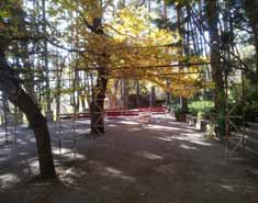Zona arbolada del campamento en Madrid en Agosto. Para niños y jovenes. Verano.