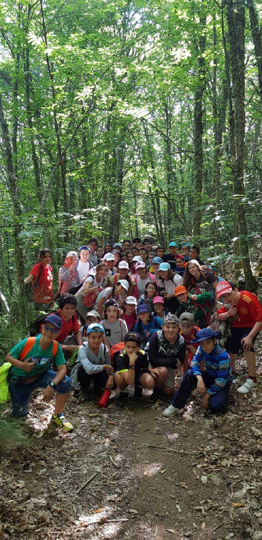 bosque en Béjar de campamento