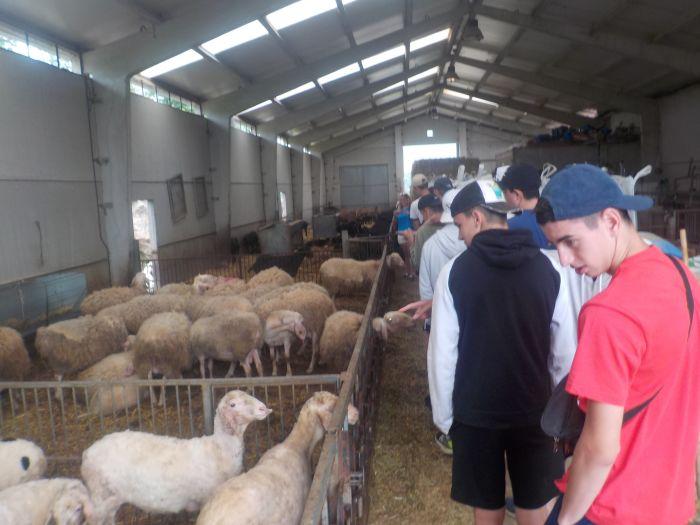 visita a granja en Asturias