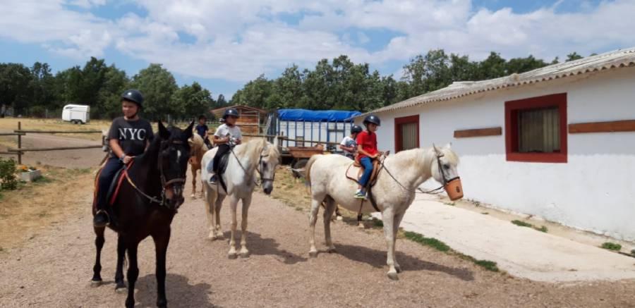 Equitacion. Caballo en el campamento de verano