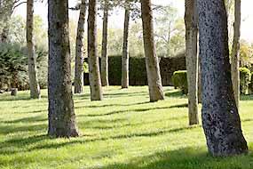 Zona arbolada campamento verano madrid julio 2021