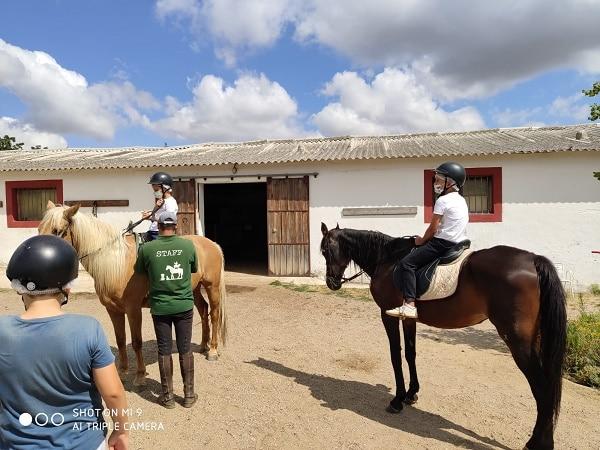 Caballo. Equitación campamento Segovia